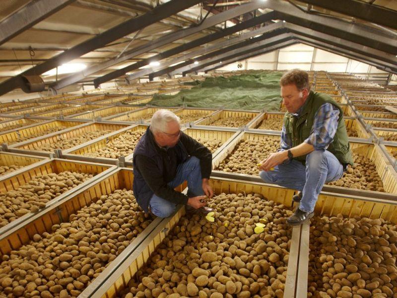 Kartoffellagerung